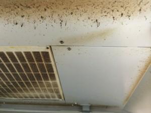 レンジフードのハウスクリーニングを川崎市高津区千年にて【清掃事例23】