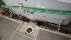 お風呂(浴室)のハウスクリーニングを横浜市港北区菊名にて【清掃事例989】